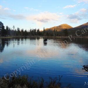John P Cardone (b.) : The lake at sunset, 2000s.