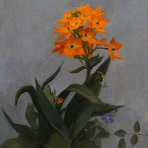 Tanvi Pathare (b.) : Orange star plant, 2020.