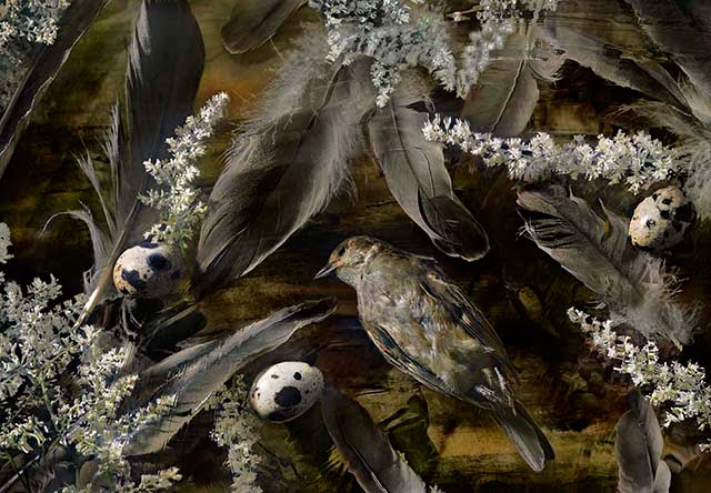 richman_susan__birds_of_a_feather__archival_pigment_print_36x25__1950