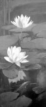 (John) Thomson Willing (1860-1947) : Water lilies and goldfish ca1940s.