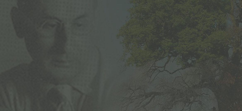 Antonio-Cirino-banner-7